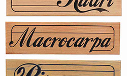 kauri macrocarpa and pine wood examples